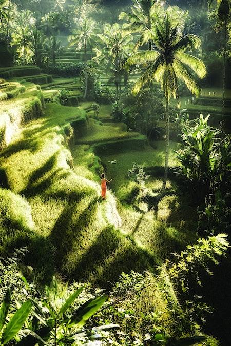 Woman walking on green terraces